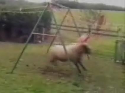 Underlige dyr