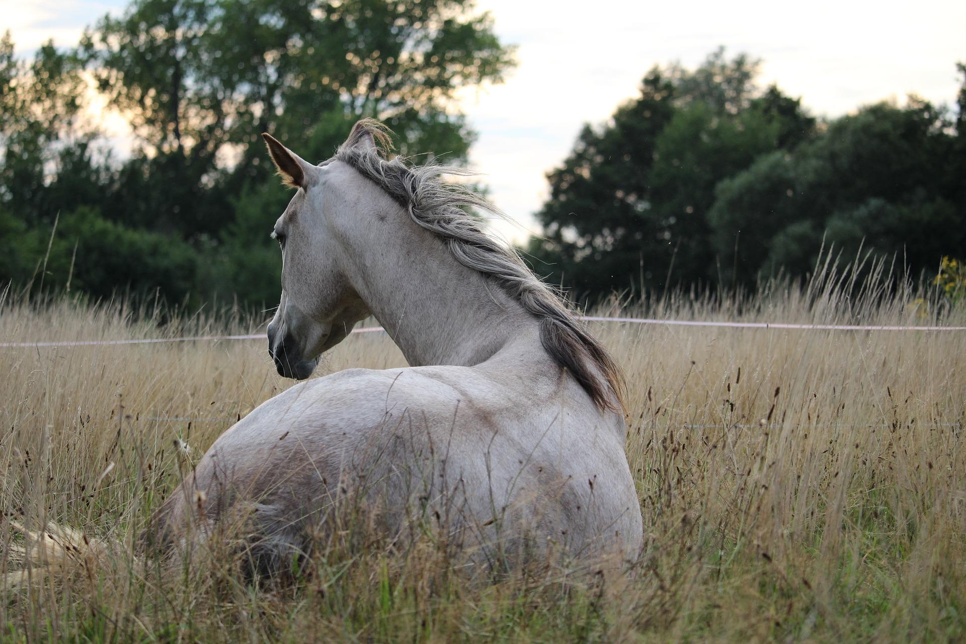 På denne hjemmeside kan du finde det bedste udstyr til din hest